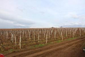 Bulgarian wine company gallery 1