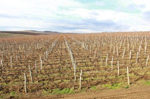 Bulgarian wine company gallery 2