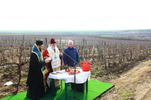 Bulgarian wine company gallery 6