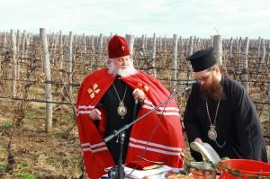 Bulgarian wine company gallery 7